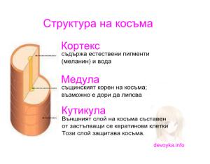 struktura-na-kosama